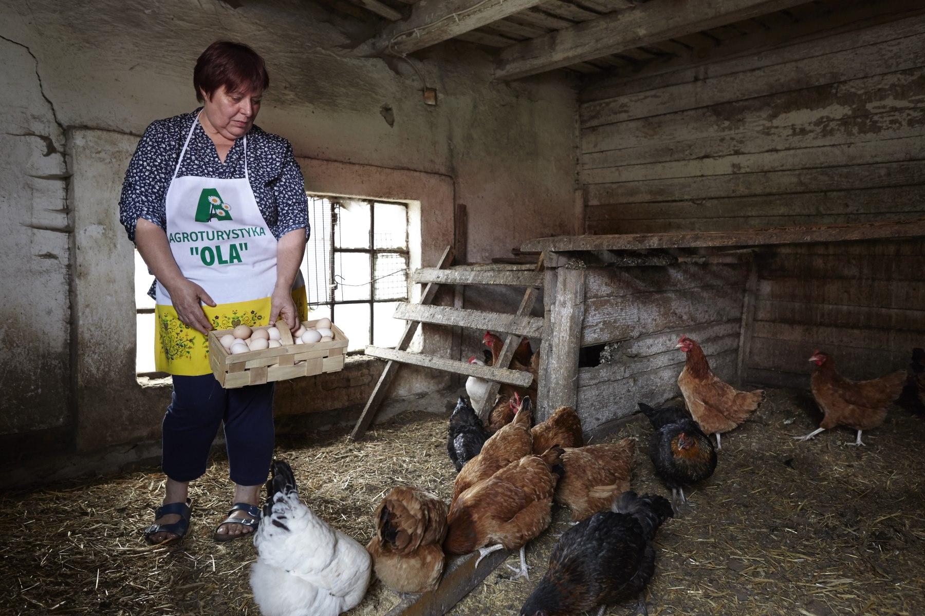 Kobieta w fartuchu karmi kury w kurniku