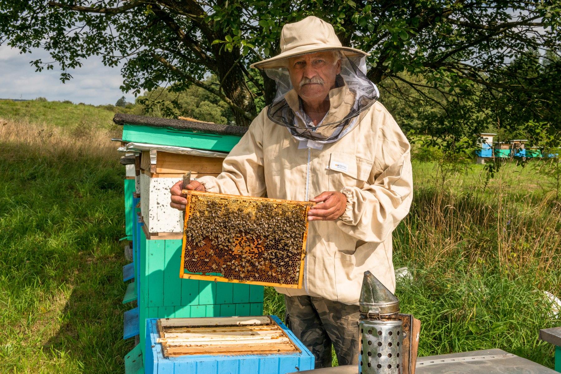 Pszczelarz prezentuje plaster miodu