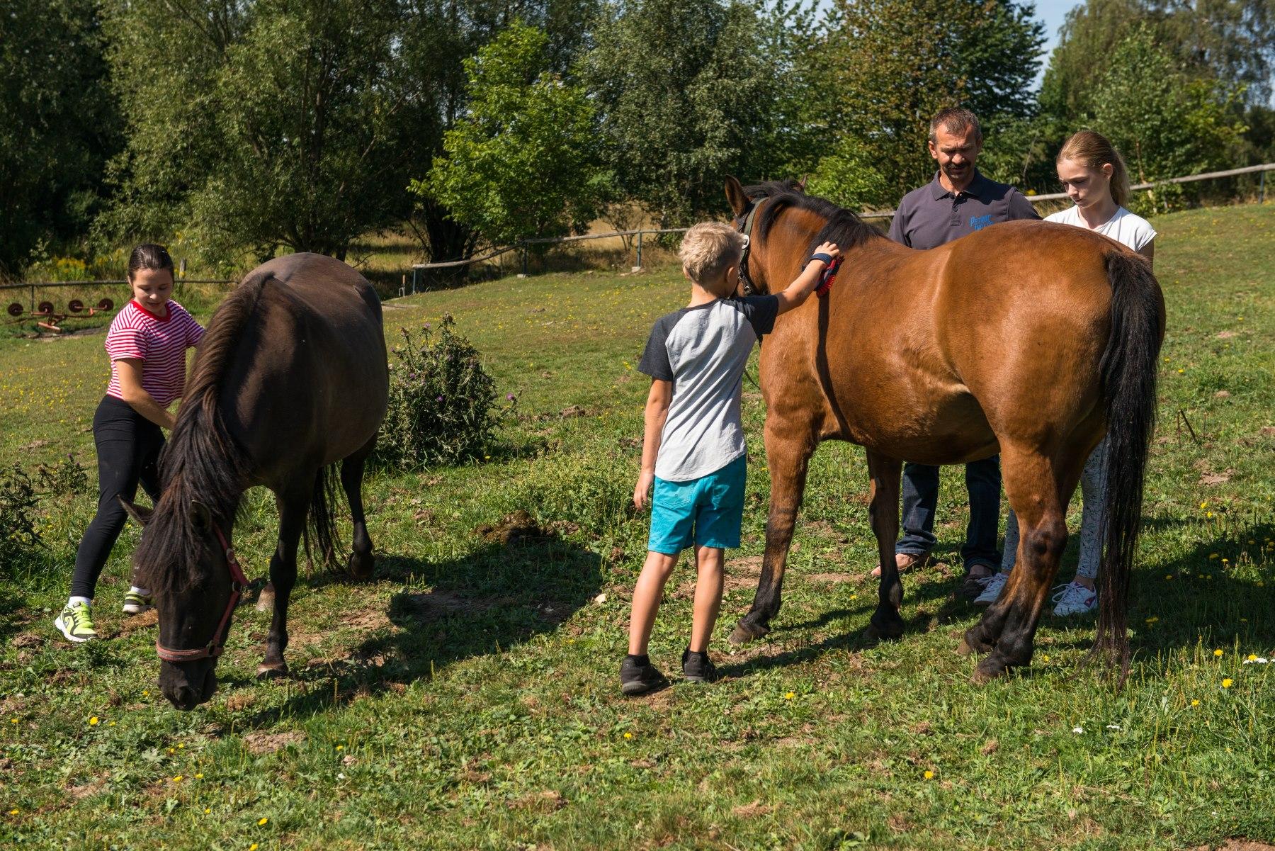 Dzieci i dorośli bawią się z końmi na łące
