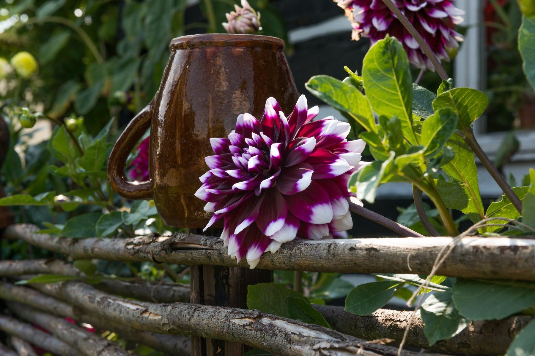 Gliniany dzbanek na drewnianym płocie wśród pięknych kwiatów