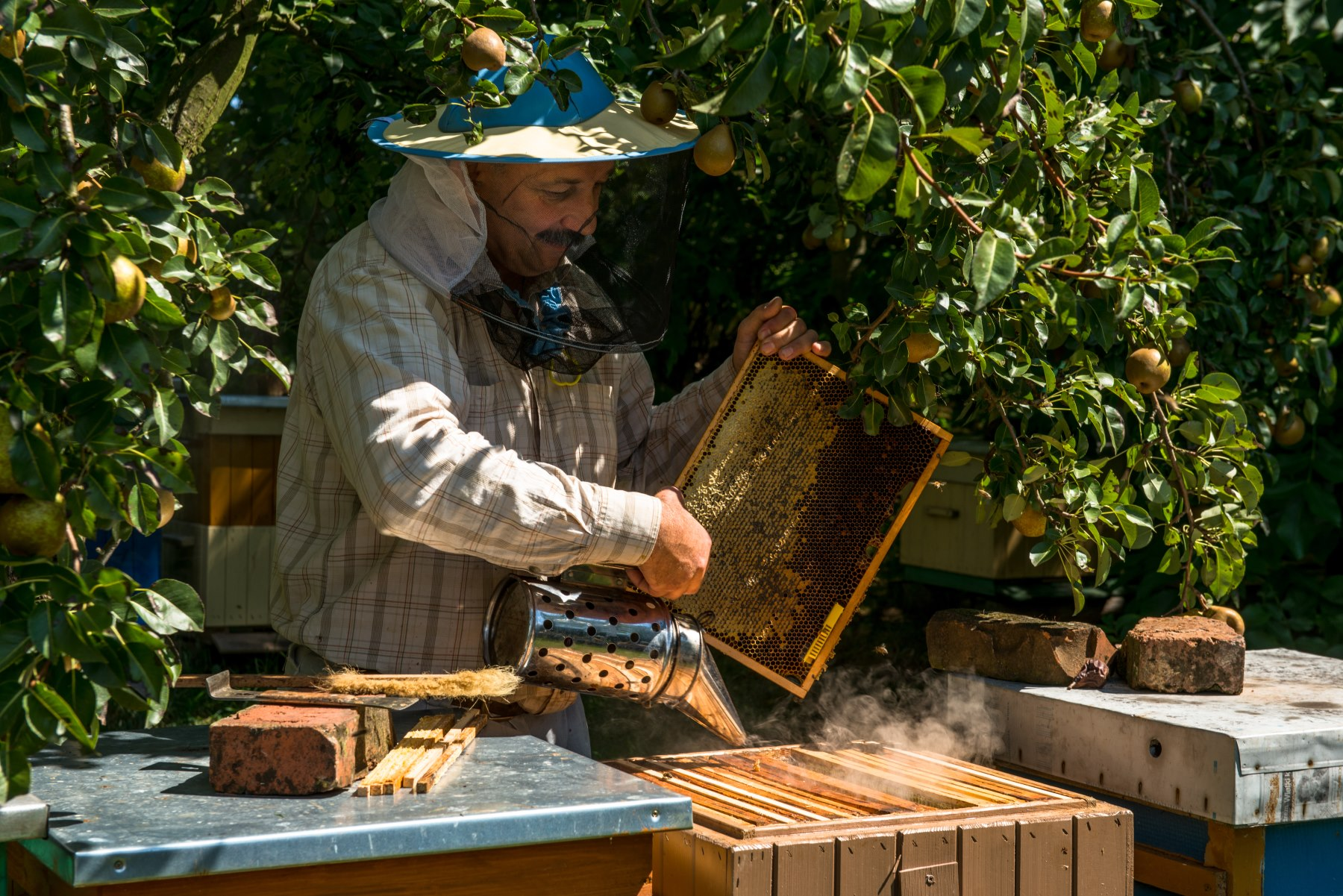 Pszczelarz w ubiorze chroniącym przed użądleniem